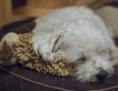 잠만 자는 토토와 범블비
