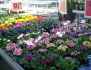 봄꽃 시장