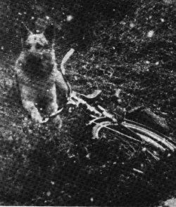 ◀ 서베를린의 한 세관원이 국경을 넘어선 공격을 받고 납치되었다. 이런 사건이 발생했다는 것은 그의 개가 범죄현장과 남겨진 자건거를 떠나지 않고 계속 자리를 지키고 있었기 때문에 밝혀졌다.
